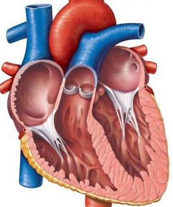 ağciyər arteriyasının anomal drenajı nədir?