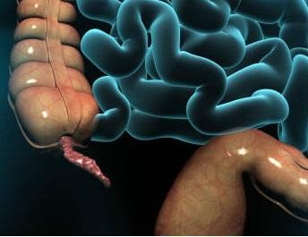 appendikulyar genital sindrom nədir?