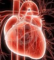 diabetik kardiomiopatiya nədir?