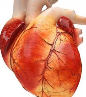 Diabetik kardiomiopatiyanın yaranma səbəbləri
