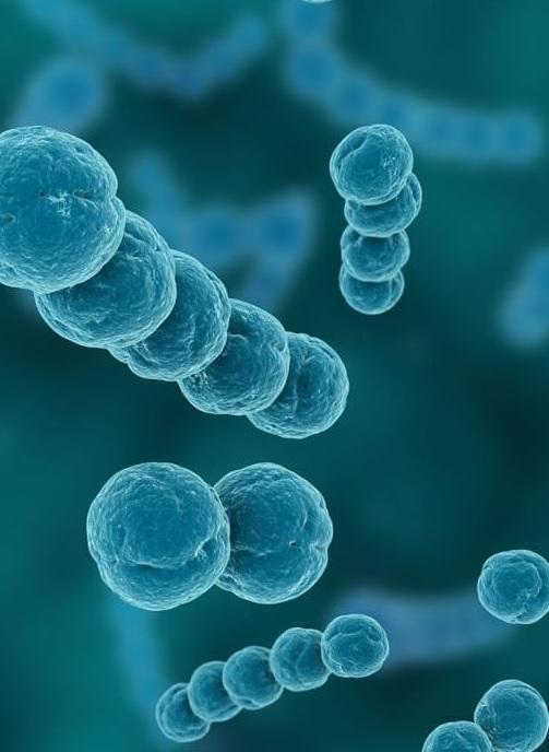 Hamiləlik zamanı qlomerulonefritin səbəbləri