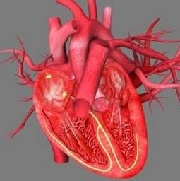 Hipertrofik kardiomiopatiyanın səbəbləri