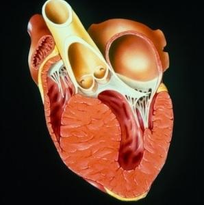 hipertrofik kardiomiopatiya nədir?
