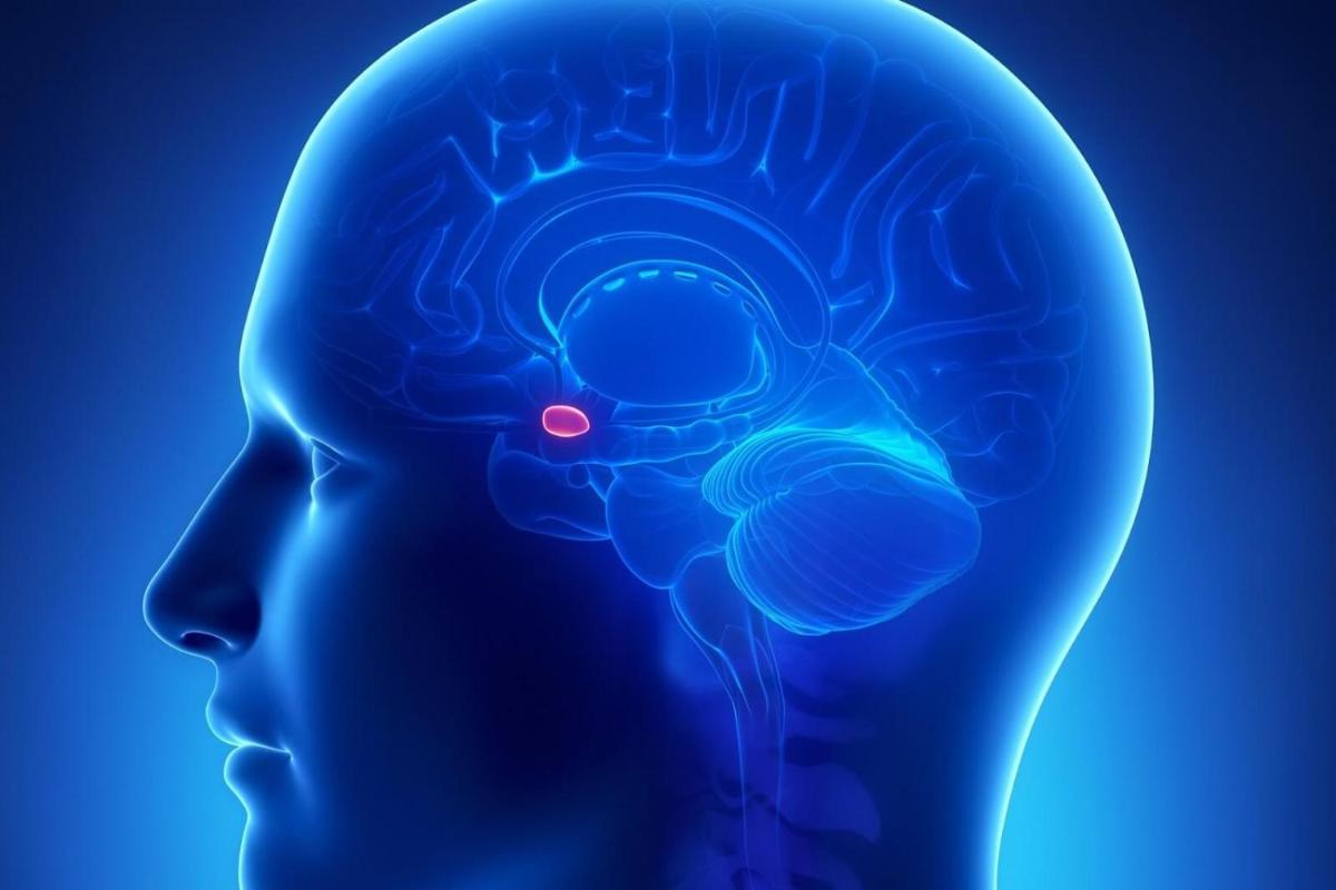 hipofizin apopleksiyası nədir?