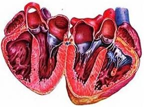 İkincili kardiomiopatiyanın səbəbləri