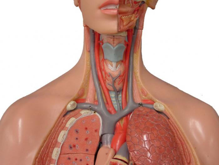 körpücükaltı arteriyanın okklüziyası nədir?